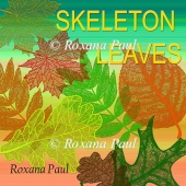 Skeleton leaves collection