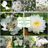 "Ten 8"" x 8"" Individual White Flower Photographs Set 1 - CU/PU"