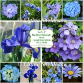 "Ten 8"" x 8"" Individual Blue Flower Photographs - PU/CU 300dpi"