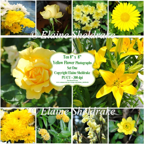 "Ten 8"" x 8"" Individual Yellow Flower Photographs Set 1 - CU/PU"