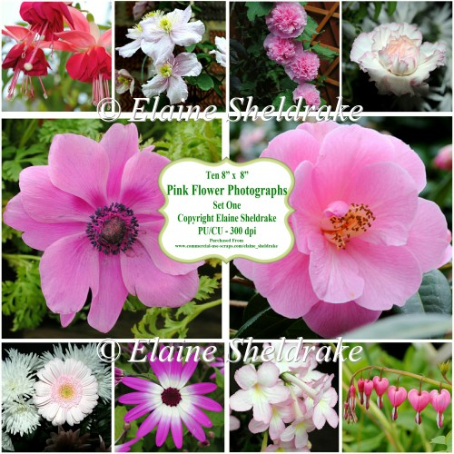 "Ten 8"" x 8"" Individual Pink Flower Photographs - PU/CU 300dpi"