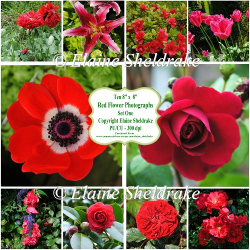 "Ten 8"" x 8"" Individual Red Flower Photographs Set 1 - CU/PU"