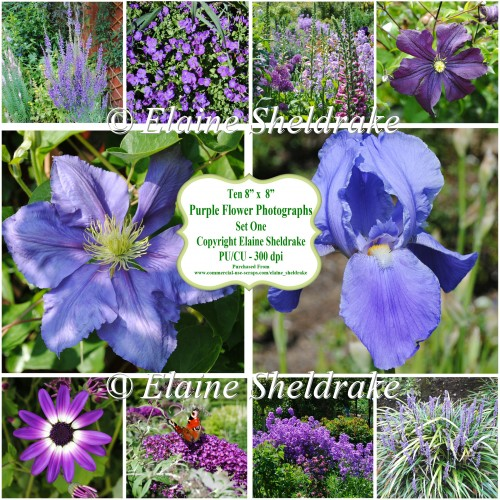 "Ten 8"" x 8"" Individual Purple Flower Photographs - PU/CU 300dpi"